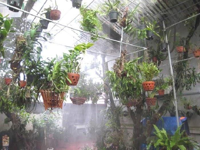 Tưới nước cho cây đầy đủ