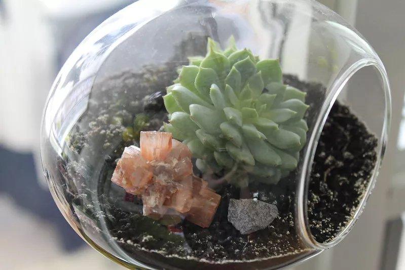Ảnh chụp cận cảnh khu vườn terrarium treo với một giàn mướp nhỏ.