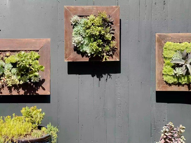 Tường nghệ thuật sống vườn thẳng đứng ngoài trời.