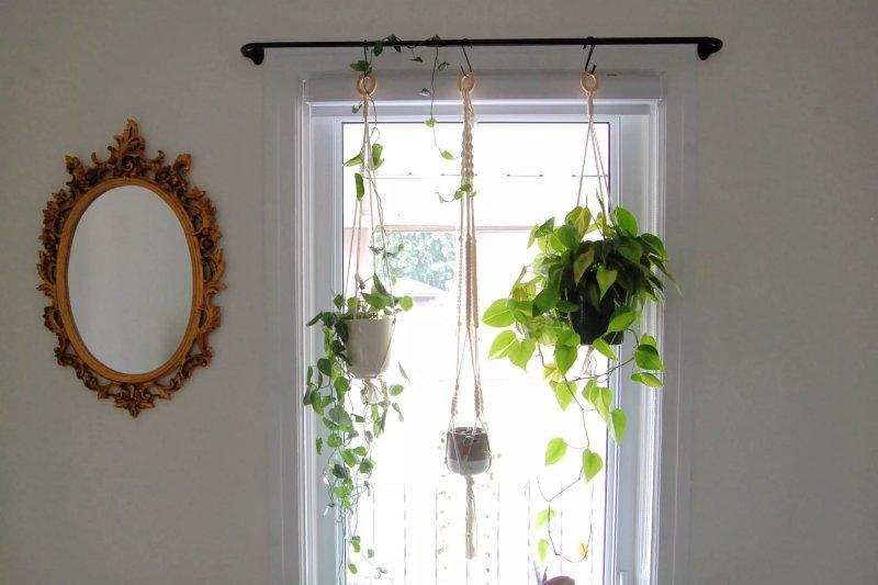 3 cây treo treo trên thanh rèm trước cửa sổ sáng sủa.