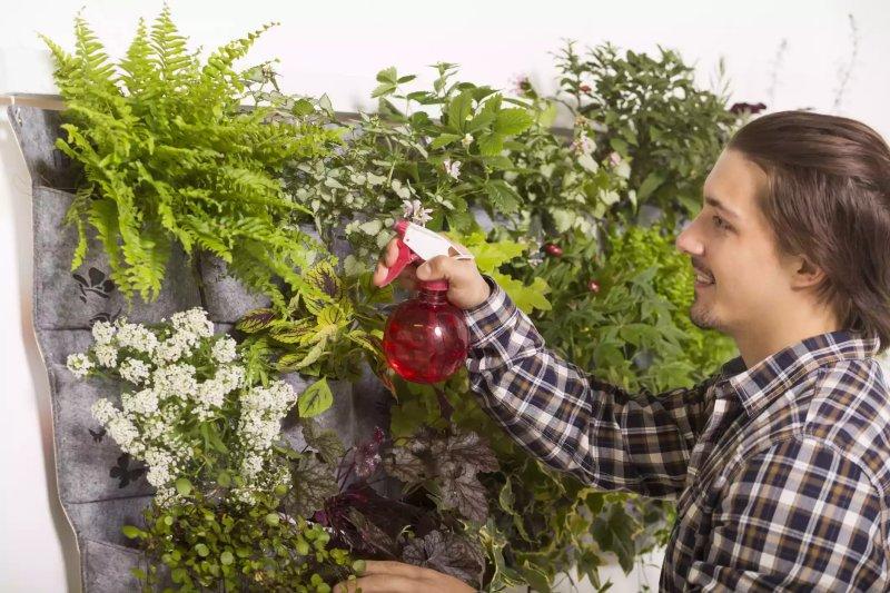 Người đàn ông đang phun thuốc cho khu vườn thẳng đứng của mình.