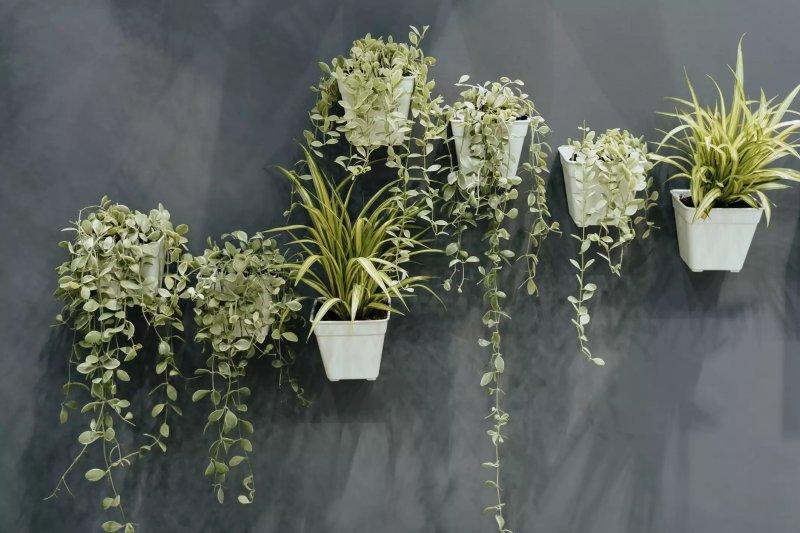 Cây trồng trong nhà xanh gắn trên tường trong chậu nhựa trắng.