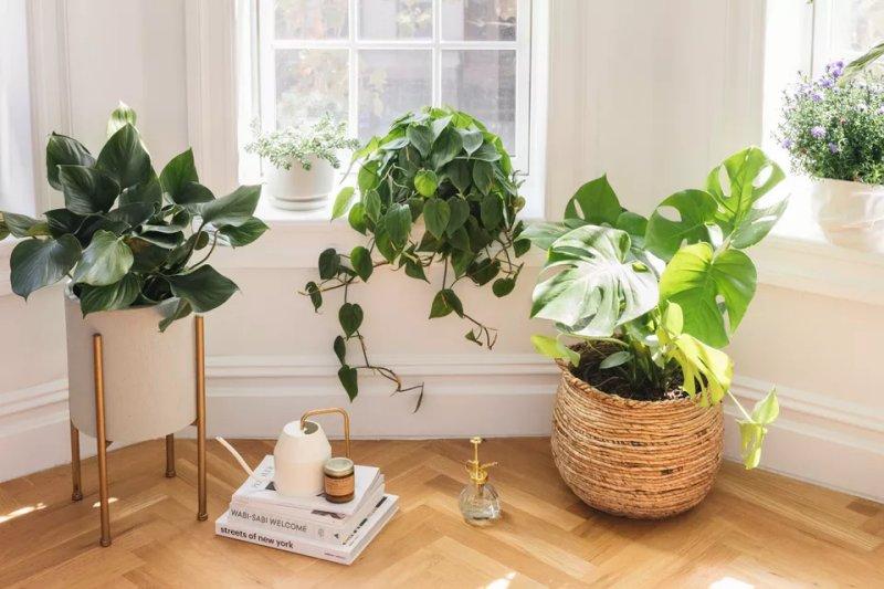 Ánh sáng tự nhiên cho cây trồng trong nhà