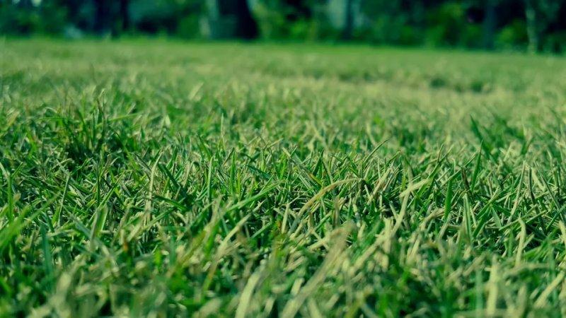 Chức năng của Kali trong phân bón cỏ
