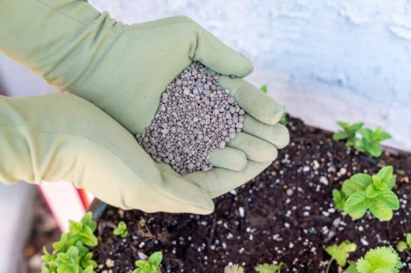 Cách bổ xung canxi cho cây trồng trong nhà