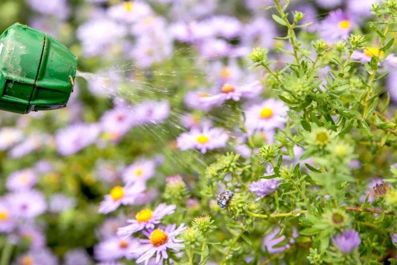 Cách sử dụng dầu neem làm thuốc trừ sâu hữu cơ cach su dung dau neem 2
