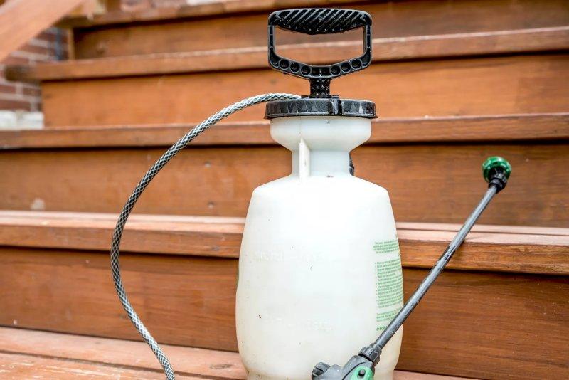 Cách sử dụng dầu neem làm thuốc trừ sâu hữu cơ cach su dung dau neem 3