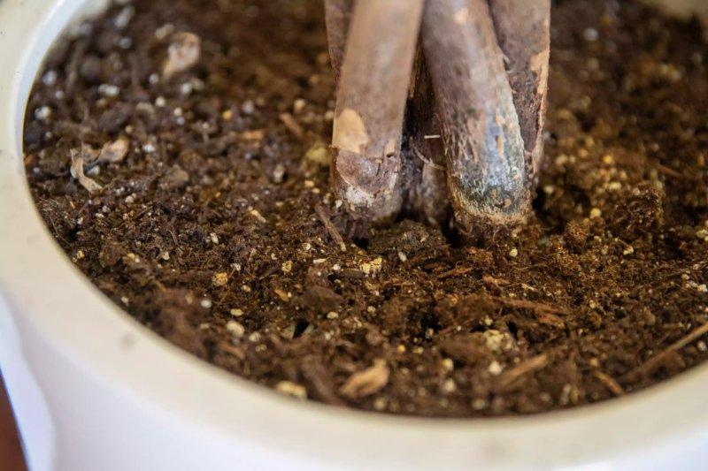 Cận cảnh đất trồng chậu làm từ than bùn