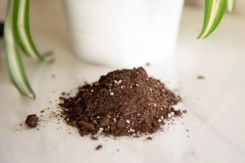 Những điều cần biết về đất trồng chậu cho cây trồng trong nhà