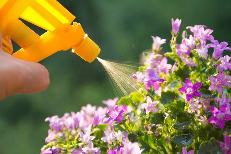 Dầu làm vườn là gì (Horticultural Oil)