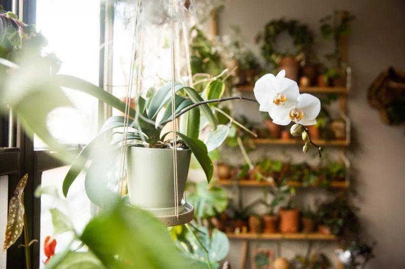 Giá thể trồng lan: Tất cả những lưu ý trước khi lựa chọn nguyên liệu