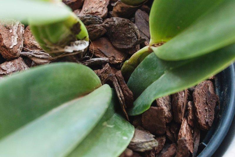 Ảnh chụp một giá thể trồng lan từ trên xuống. The Spruce / Letícia Almeida