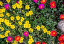 Home hoa muoi gio 1