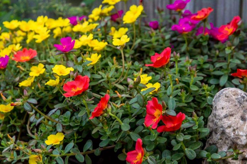 Những bông hoa hướng về phía ánh sáng mặt trời. The Spruce / Adrienne Legault