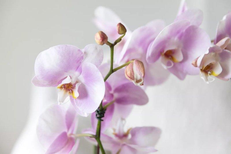 8. Biết khi nào các loại lan nở hoa The Spruce / Letícia Almeida