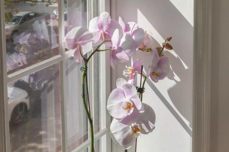 cây phong lan bên cửa sổ tối The Spruce / Letícia Almeida