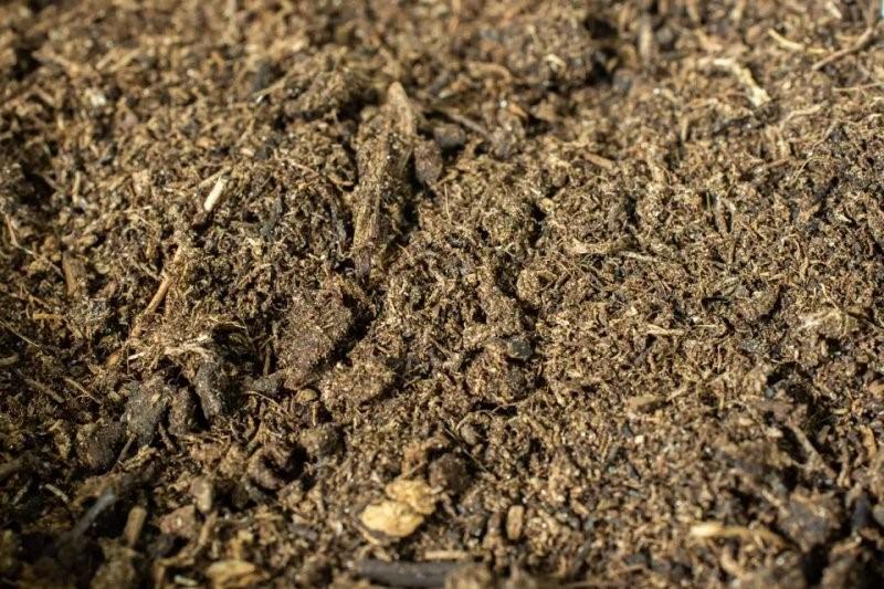 Peat Moss (Rêu than bùn) là gì và cách sử dụng như thế nào?