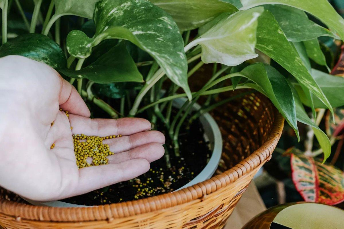 Phân bón cho cây trồng trong nhà dạng hạt. The Spruce / Fiona Campbell