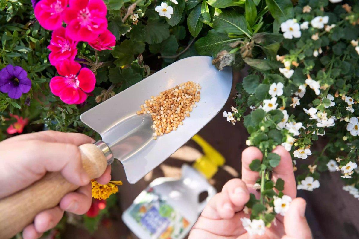 Sử dụng phân bón cho hoa bằng phân bón tan chậm The Spruce / Letícia Almeida