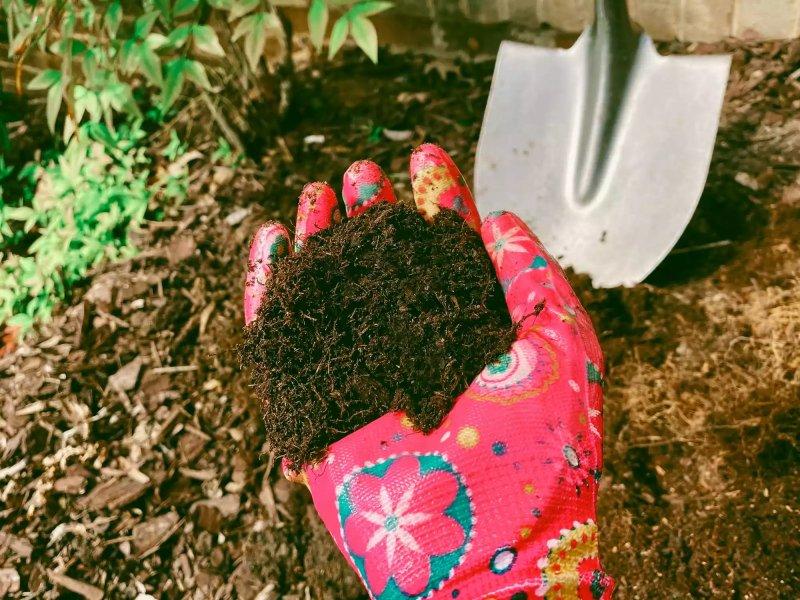 Bón phân cho cây trồng với phân gà ủ hữu cơ. Grace Cary / Getty Images
