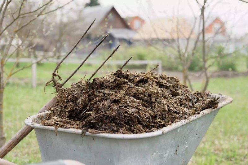 Phân gà cần được ủ trước khi thêm vào đất. Kondor83 / Getty Images