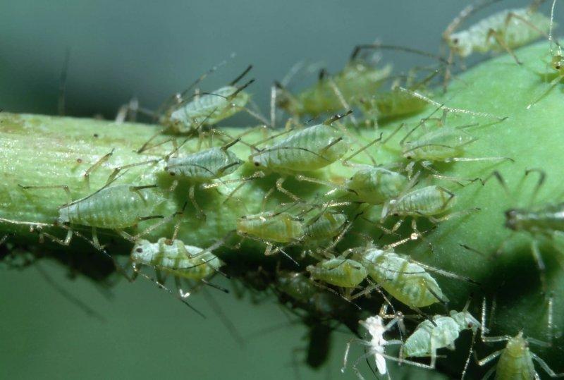 Cách phương pháp loại bỏ rệp trên cây trồng trong nhà hiệu quả