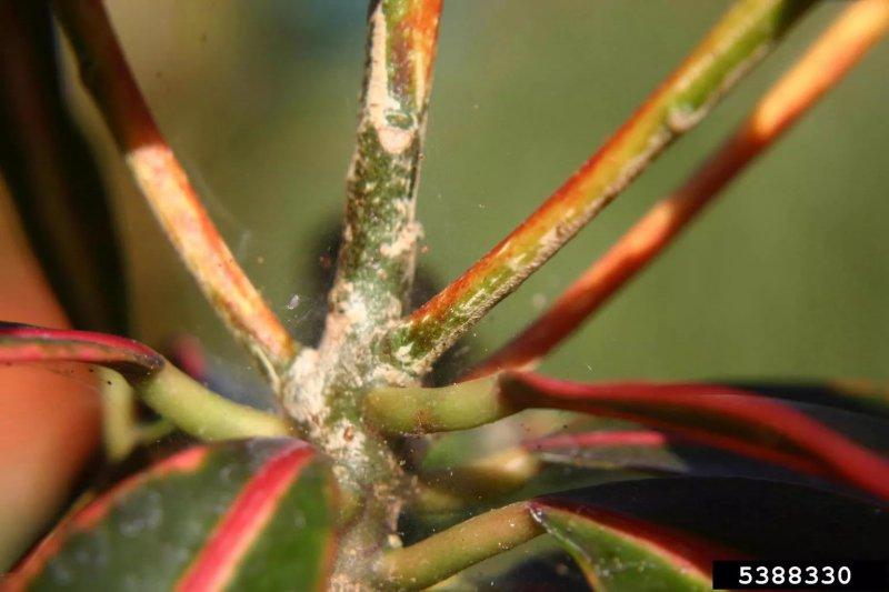 7. Ve nhện - Spider Mites